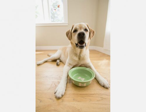 Nutritional Support for Pet Arthritis